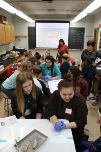 Our Sheep Brain Dissection hands-on activity is very popular with participants!